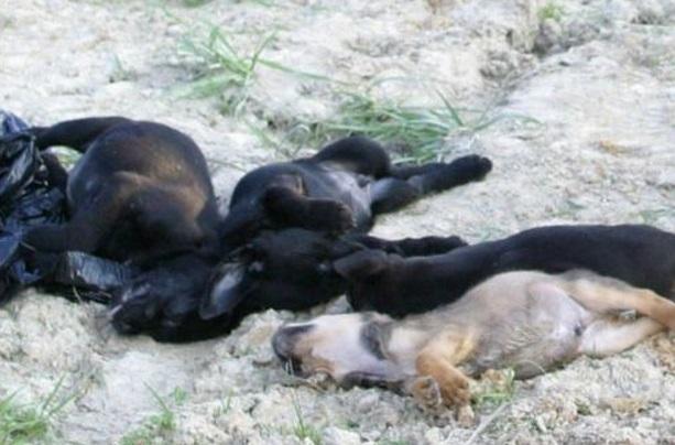 dead-puppies_0001